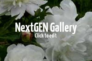 Pfingstrosen – Außergewöhnliche Blütenpracht für den Garten