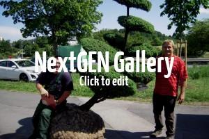 Tolle Bilder von einem Gartenbonsai im Garten eines Kunden