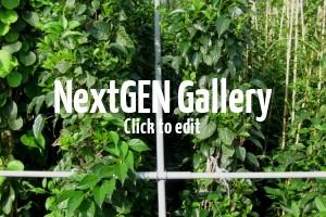 Bildergalerie von wunderschönen Rank- und Kletterpflanzen