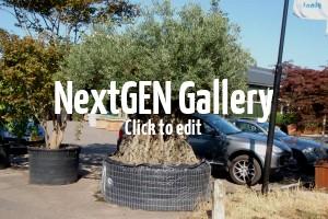 Exotische und Mediterrane Gartenpflanzen – eine Bildergalerie