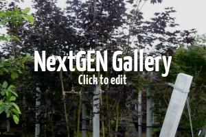 Bildergalerie mehrstämmige Gehölze für den Garten
