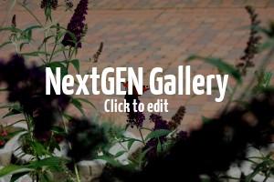 Impressionen aus dem Garten eines Kunden – Tolle Bilder der Flora in Fauna