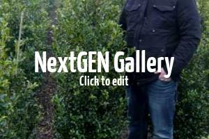 Ilex / Stechpalme – viel mehr als nur die klassische Heckenpflanze