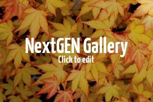 Indian-Summer für die heimischen Gärten – Laubgehölze mit atemberaubender Herbstfärbung