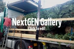 Keine Pflanze zu groß & keine Straße zu eng