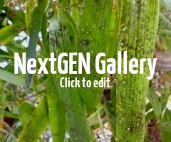 Bambus-Blätter bekommen schwarze Punkte und werden klebrig – Ursachen und Gegenmaßnahmen