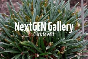 Neue Rhododendren mit außergewöhnlichen Blättern & prachtvollen Blüten