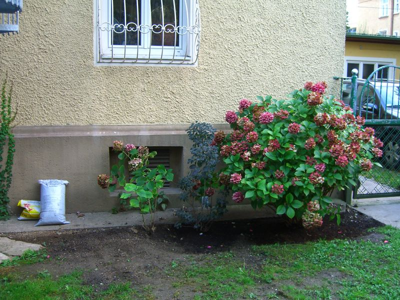 pflanzen f r schattigen standort in stadtgarten fragen bilder pflanz und pflegeanleitungen. Black Bedroom Furniture Sets. Home Design Ideas