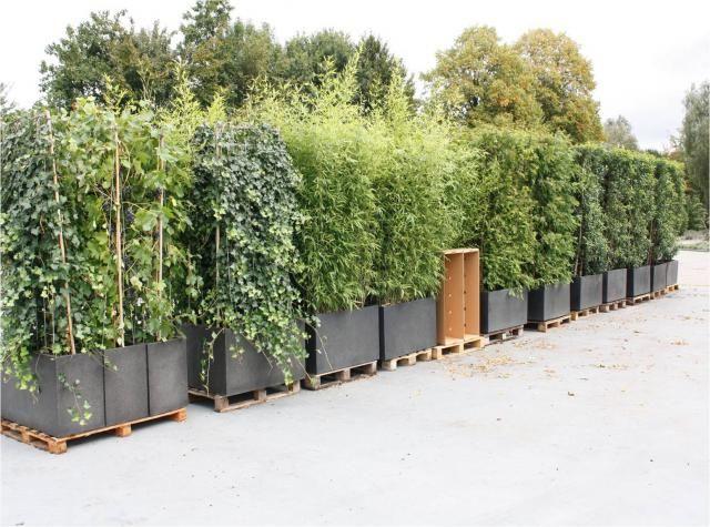 pflanzenspecial heckenelemente exklusivit t und. Black Bedroom Furniture Sets. Home Design Ideas