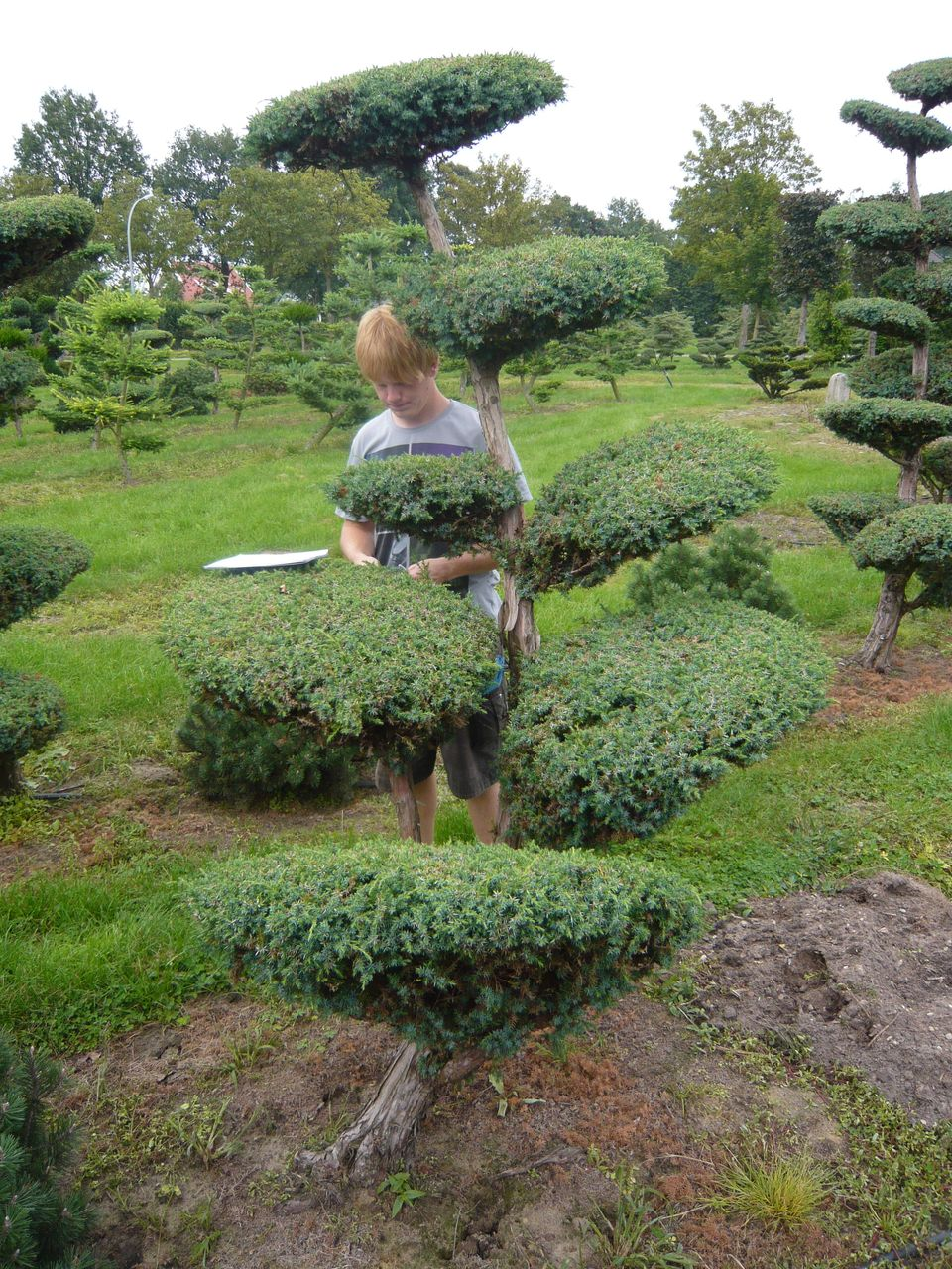Pflanzenspecial gartenbonsai kostbarkeiten japans - Winterharte pflanzen fur den garten ...