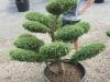 garten-bonsai-0002