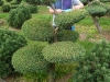 garten-bonsai-0006