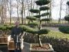 garten-bonsai-0009