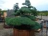 garten-bonsai-0011