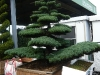 garten-bonsai-0013