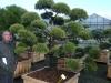 garten-bonsai-0015