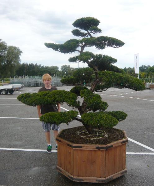 Fruhjahrsputz im heimischen garten mit dem richtigen for Garten planen mit bonsai acer