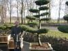 Exklusiver Bonsai für den Garten