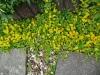 Weitere schoene gelbe Blüh- und Zierpflanze