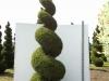 05_spirale_cupressocyparis_-castlewellan_300-350cm