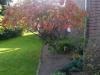 06_herbstblueher-rhus-typhina-essigbaum-hirschkolbensumach-jpg