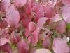 08_herbstblueher-jpg