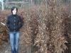06_carpinus-betulus_hainbuche_175_200cm_wurzelnackt