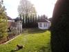 Cypressocyparis leylandii / Leyland-Zypressen der Größe 400-450cm im Garten