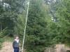 05_fichte_rottanne_picea_abies_600-700cm