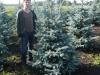 17_blaufichte_picea_pungens_hoopsii_200-250cm