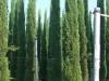 03_Cupressus_Smpervirens_Mediterrane_Saeulenzypresse