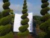 03_Garten-Bonsai Cypressocyparis l. Castlewellan 'Spirale' Hoehe 350-400 cm