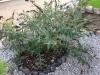08_Gartenmimpressionen