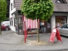 06_Acer_platanoides_Globosum_Kugel-Ahorn