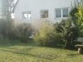 02_Garten_mit_Sichtschutzpflanzen.JPG