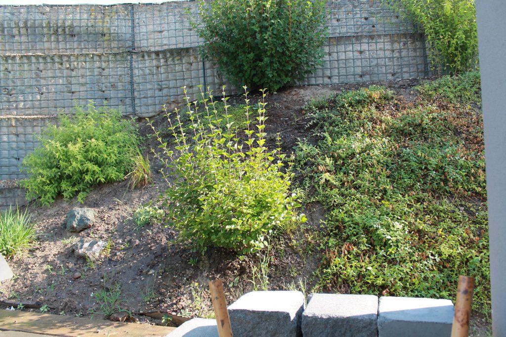 Empfehlungen Fur Hangbepflanzung Gesucht Abwechslungsreich Und