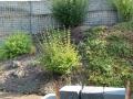 Pflanzeberatung für Hanglage