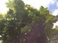 Kugelahorn (2)