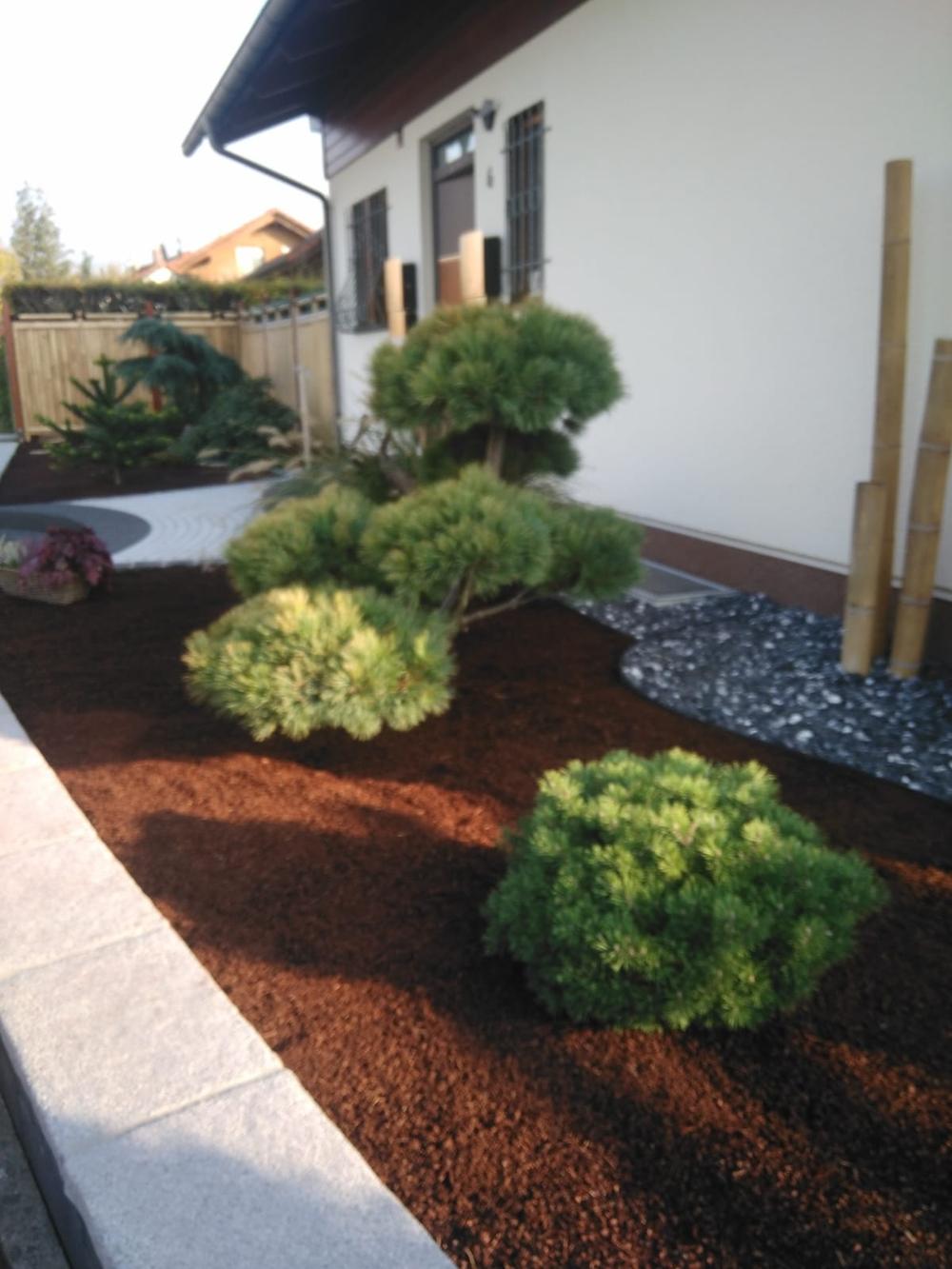 Gartenbonsai_Pinus_Strobus_Radiata (1)