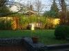 bambus_fargesia_jumbo_175cm_1