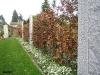 Rotbuche / Fagus Sylvatica 175-200cm im Herbst