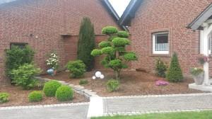 Bilder von Gartenbonsai als optisches Highlight im Garten
