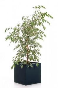Es muss passen: Die richtigen Pflanzkübel für große Pflanzen und Bäumchen