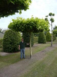 Den Sommer im Garten genießen – mit Gartenmöbeln für den Sommer und Dachplatanen als Sonnenschutz