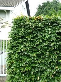 Gartenarbeiten im September – Es gibt viel zu tun