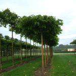 Schöne Gartenpflanzen und das passende Gartenhaus sorgen für viel Gemütlichkeit im Garten