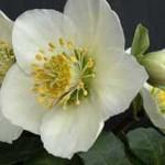 Was Hand- und Heimwerker alles im Blumenbeet bauen können