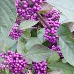 Neben einem Instektenhotel sind besonders blütenreiche Pflanzen bei Insekten aller Art sehr beliebt