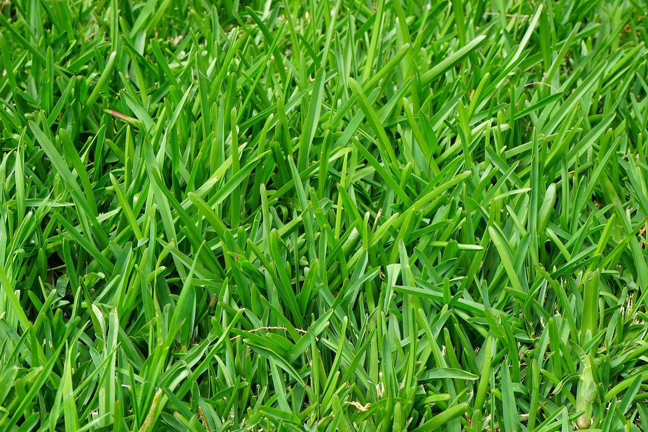 Der Beste Rasen