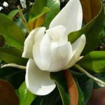 Außergewöhnlicher Zierbaum für den Garten gesucht – Empfehlungen?